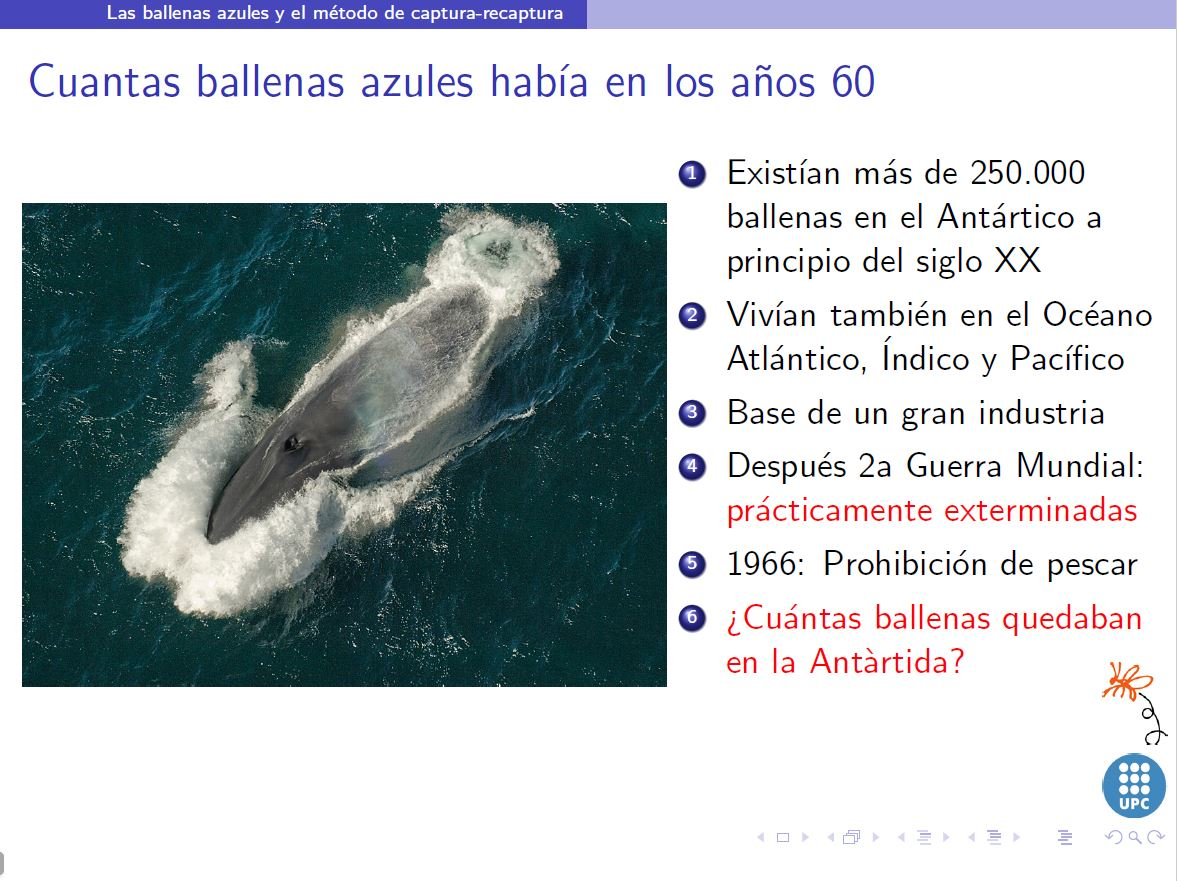 cuantas ballenas